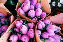 Flowers Make Me Happy / by Stacia Elizabeth