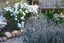 home inspiration outside / by Susan Wuest