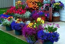 HOME: Garden Inspiration