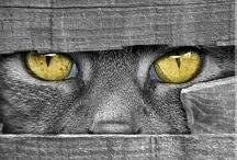 Eu ❤ Gatos & Cats