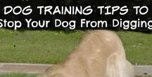 Pets / Dogs | Cats | Training | Pet Food | Treats