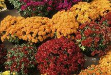 Outdoor/gardening / Garden