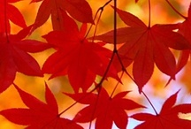 Autumn Decorations and Fall Colors / by Judy Marie