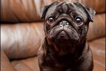 ღ | A Pug Point of View / A pinboard to celebrate my #pug obsession. See my own #pugs, Charlotte and Darcy, on my Instagram feed at www.instagram.com/cerellasechrist or on the #Instagram app @cerellasechrist | #pets #cute #adorable #puglove #puglife