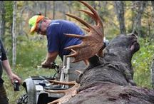 JAKT- HUNTING / Great photos and stories from moose-hunting and other from Mårdsjön's East hunting-team and other.