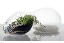 Terrariums - Who Knew? / I had never heard of terrariums, but now that I have I adore them. / by Kim Quinn