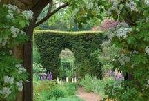 Garden / by Angel Sadal