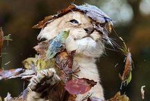 Animals / by Cassie Oaks