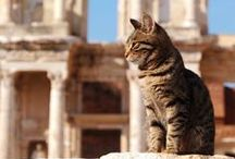 Travel: Crazy Cat Lady Around The World / Because I am a crazy cat lady in need of a daily cat photo.