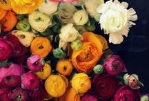 Flowers / by Kim Gatenby