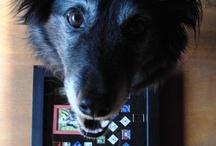 Dog Agility Life!