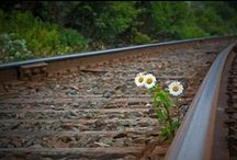 Daisies and Sunflowers!! <3 / Simple...Unpretentious...Beautiful / by Melissa Buck