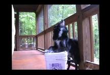 Fun dog tricks!