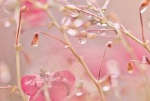 ~ After the Rain ~ / Life isn't about waiting for the storm to pass, it's learning to dance in the rain !!!!! / by Alison Faciane