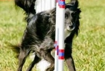 Dog agility gear and more!