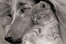 My Furry Friends / by Jennifer Reimer Stephens
