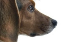 Understanding dogs! / Great articles that can help you understand your dog more fully!