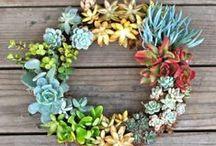 wreath mania / by Sarah Alves