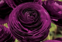 Purple Passion! / by Jolene Gibson