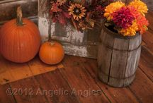 Fall Decor / by Kim Booth