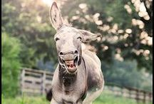 Laugh. Guffaw. Chuckle. Smile. / by Christine
