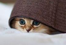 Cute*Awe*Sweet / by Jessica Craig-Davy