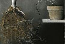 Still Life / by Veronique Lagarde