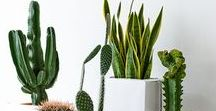 House Plants / Ideas and inspiration for letting nature in your home.