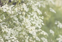 Botanical / by Eleanor Rose Kissick