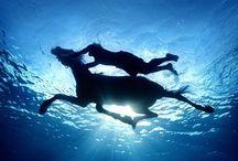 Horses / Horses, equestrian, photography