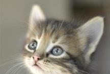 Inspiration - Animaux / Principalement des chats vous m'excuserez hein mais de jolies images d'animaux qui me fascinent