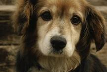 Puppy Love / by Mollye Spaulding