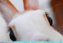 I Love Bunnies! / by Dawn Lee-Blum