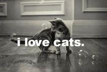 Felines / by Cat Garlick