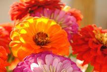 Flowers so pretty ! / by Anne Gates