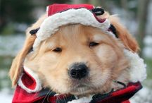 Doggie Luv ! / by Anne Gates