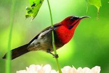 Birdies ! / by Anne Gates