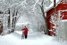 Winter ! / by Anne Gates
