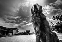 PhoDOGraphy / awesome dog photos