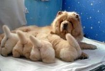 DOGS AND PUPPIES / by Debbie Dumont