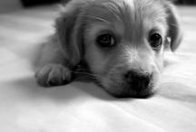 // Soooooo cute // / Mostly puppies!