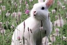 Easter / by Jamie Kinder-Brimingham