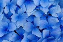 """All things """"BLUE"""" / by Karen Barnett"""