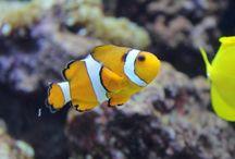L'acquario di Leolandia / Più di 880 specie di pesci ti aspettano! / by Leolandia