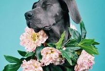PET ART & PHOTOGRAPHY / Modern pet photography - dogs, cats, rabbits, birds, horses and more.