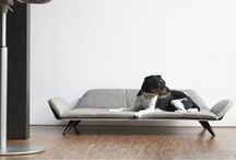 DESIGNER DOG PRODUCTS / The hottest designer products and accessories for dogs - including luxury beds, stylish collars and leads and modern bowls