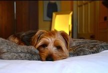 PET FRIENDLY PLACES / The very best pet friendly places including hotels, pubs, restaurants and glamping holidays.