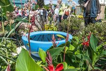 The Teacup Garden / Photos from and inspiration for Touch Landscapes' award-winning show border at BBC Gardeners' World Live 2015