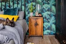 DOGS & INTERIORS / Cute pooches and stylish interiors - what more could you want!?