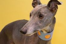 HIP HOUNDS / Beautiful things for Sight Hounds including Greyhounds, Whippets and Italian Greyhounds